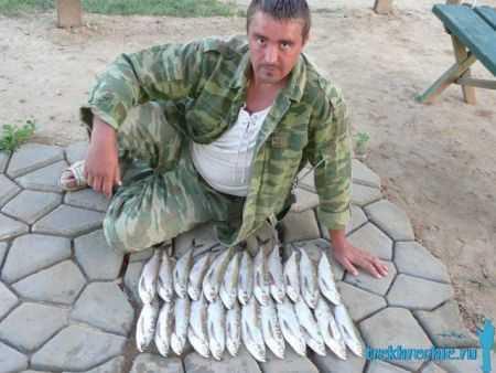 Ловля чехони: снасти для ловли чехони на спиннинг и поплавочную удочку