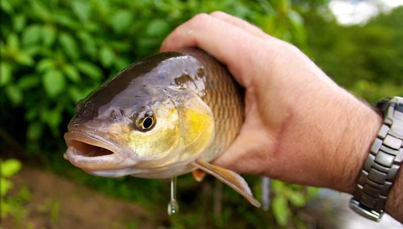 Ловля на кузнечика — Здесь рыба