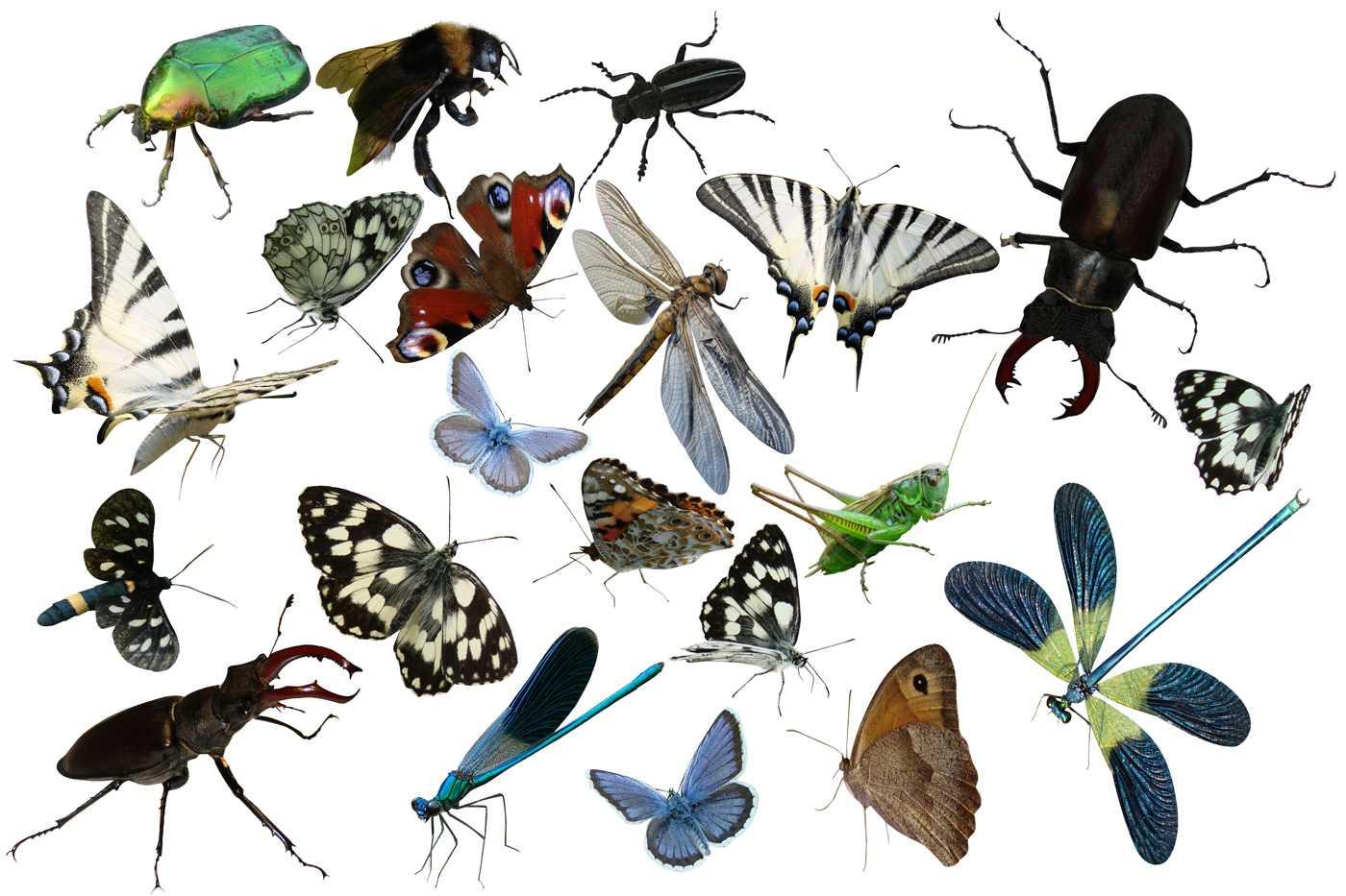 Как собрать коллекцию насекомых